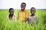 Rice Farmers children in Uganda