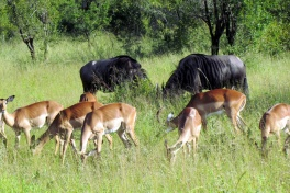Sabi Sands game
