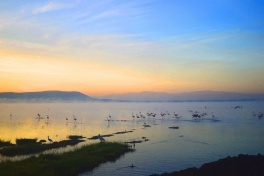 Lake Nakuru, Flamingo Dawn