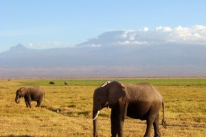 Elephants in front of Mount Kilimanjaro by MyFear on Flickr
