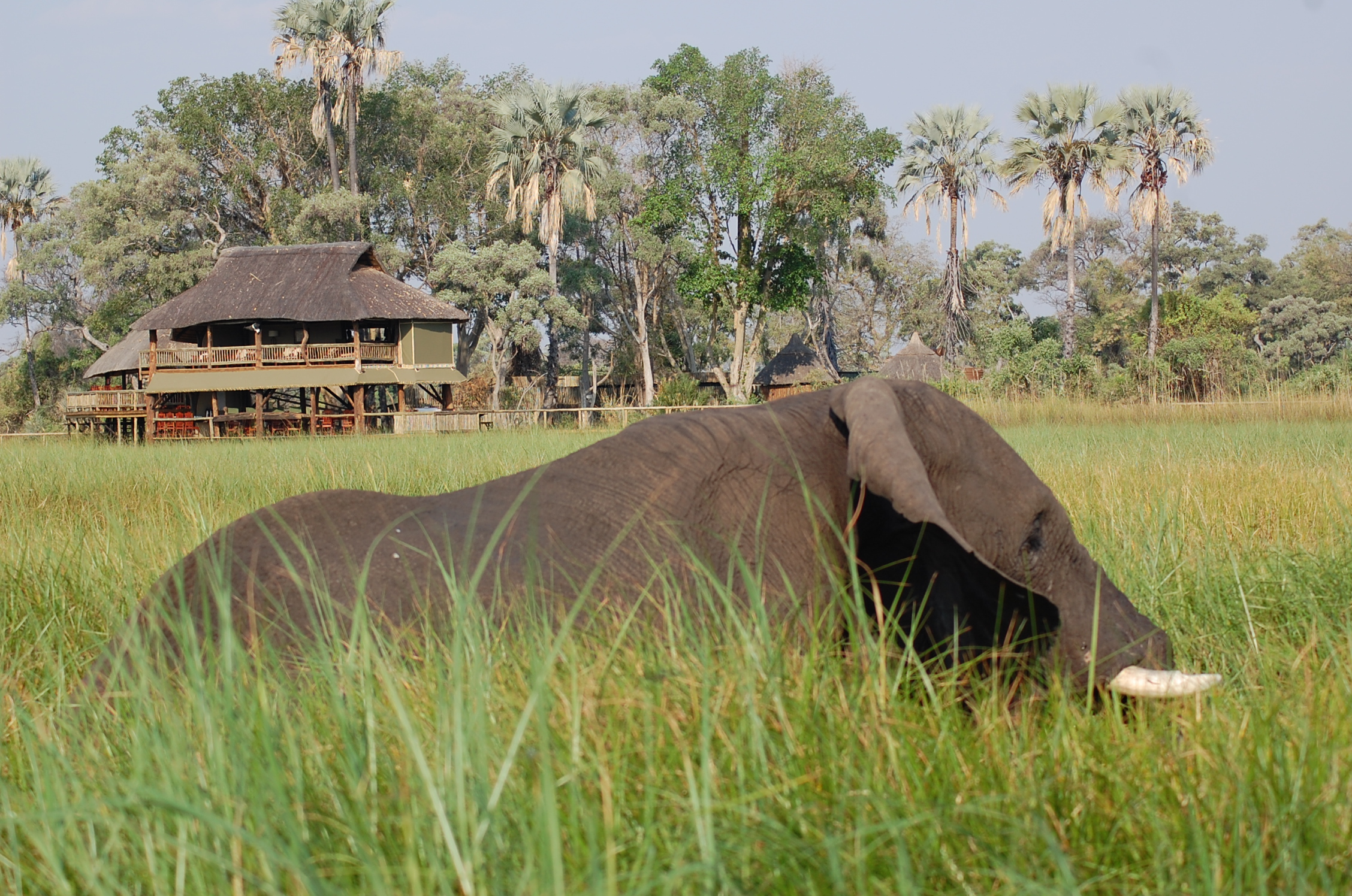 time of year to visit? - Moremi Game Reserve Forum ...
