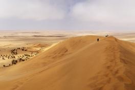 Dune 7, one of the world's highest, at Sossusvlei