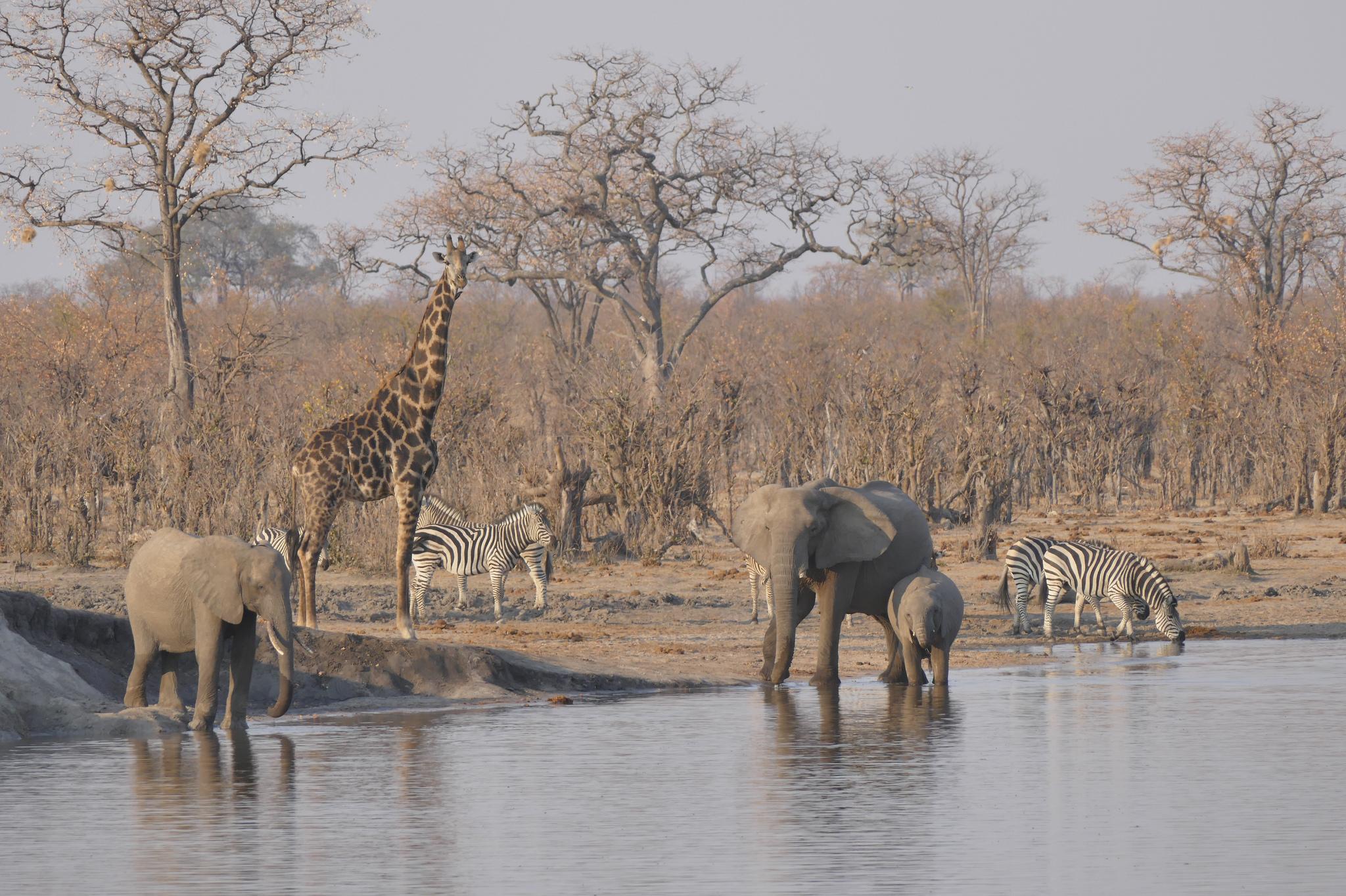 Page 2 Hwange National Park Safaris Tours Amp Budget