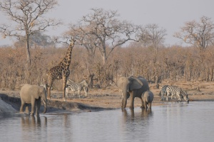 Hwange wildlife by Jean-Marc Dottrens