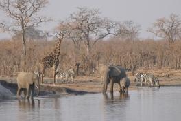 Hwange wildlife