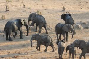 Hwange elephants by Joepyrek
