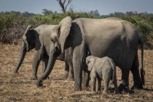 Elephants by Alex Berger