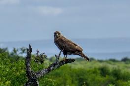 Addo birdlife