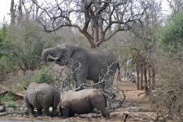 Hlane elephant & rhinos