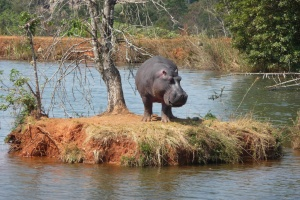 Mlilwane hippo by jack4trip