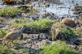 Kafue birdlife
