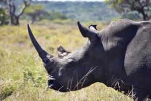 Isimangaliso rhino by Darren Glanville