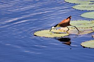 Isimangaliso birdlife by Gerry Zambonini