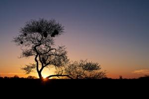 Sunset, Nxai Pan by s9-4pr