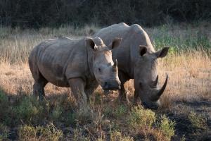 iMfolozi Game Reserve rhinos by Ryan Kilpatrick
