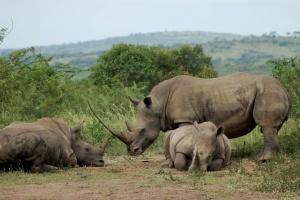 Hluhluwe Imfolozi rhinos by jumblejet