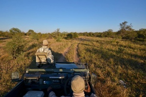 On a Balule Game Drive