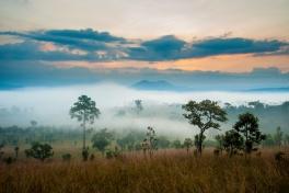 Kruger dawn landscape