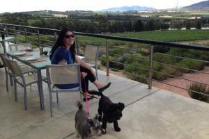 Glen Carlou Wine Estate inbetween Paarl and Franschhoek by Luke Hardiman