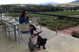 Glen Carlou Wine Estate inbetween Paarl and Franschhoek