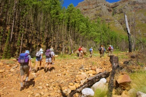 Hikers entering a pine forest, Wolwekloof mountain, near Franschhoek