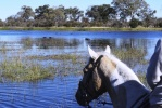 Okavango Delta horse riding