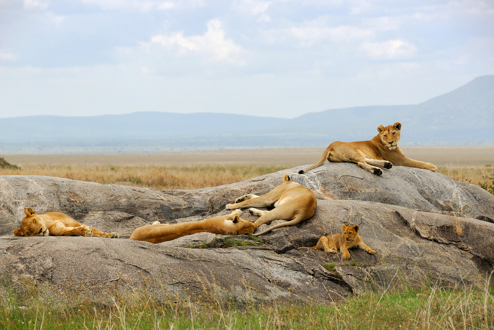 Budget Travel In Masai Mara Budget Travel Guide