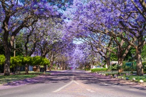Jacaranda City, Pretoria by Sutterstock