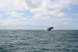 Southern coast whale watching