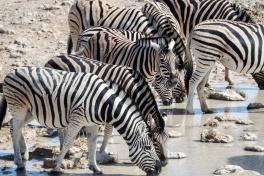 Etosha safari guide