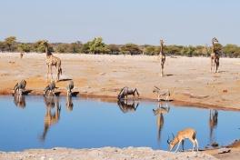 Etosha waterhole wildlife