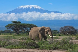 Kilimanjaro with an elephant in the foreground